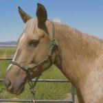 Quel matériel éthologique choisir pour débuter dans l'équitation?